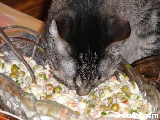 мордой в салате