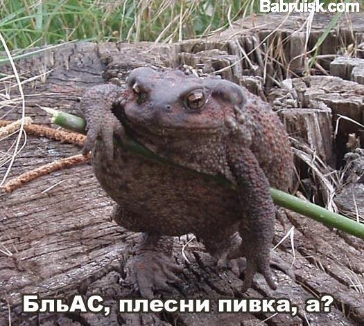 жаба, ага