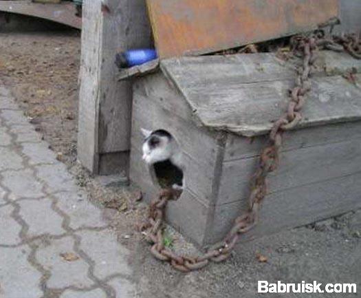 кот в конуре
