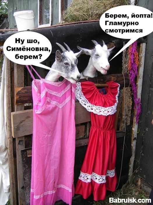 козы в платьях
