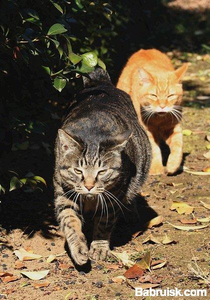 красивые коты, кошачья братва