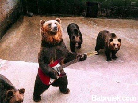 медведи жгут