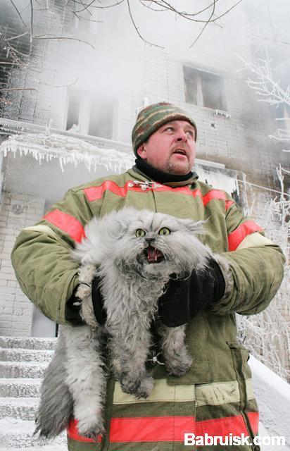 кот и пожарный