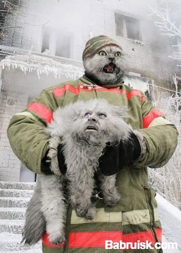 фотожаба на пожарного с котом