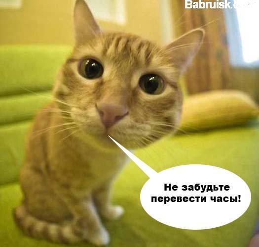 кот hasana напоминает