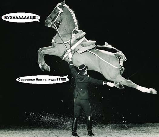 конь, сцуко!
