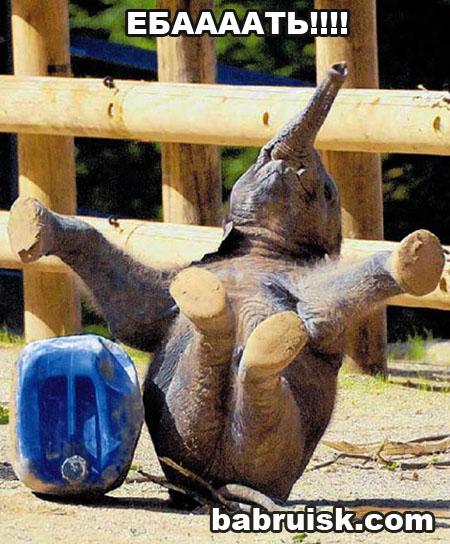 слоненок как бы удивился