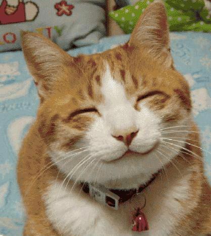 обкуренный кот