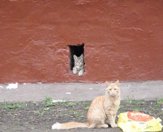 настенные котики