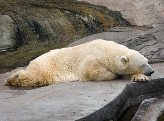 спит, сцуко