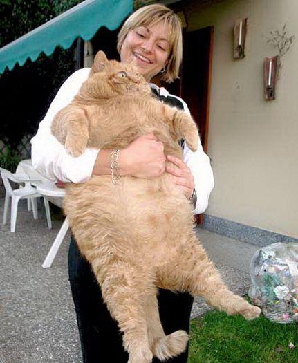 кот хасана