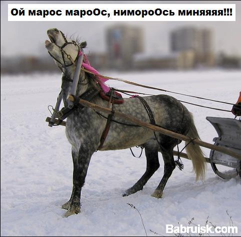 зима, мороз, собчак, лошади
