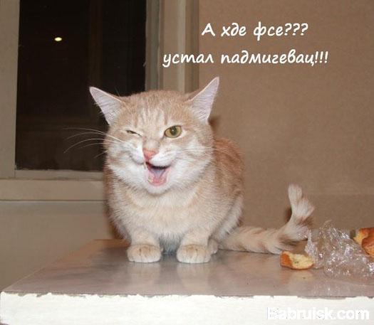 кот подмигнул