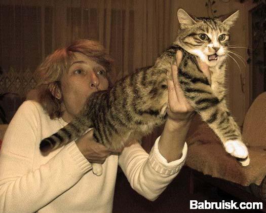 дует коту в задницу