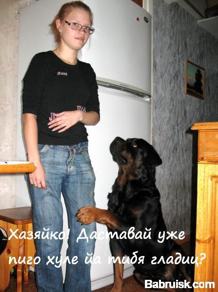 собака и пиво