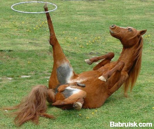 конь акробат