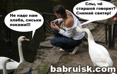 сиськи-лебеди