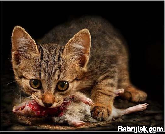 обед с котами