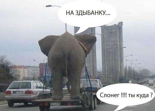 слонег