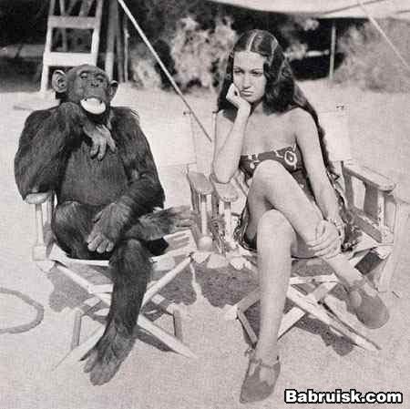 возможен секс с обезьяной О_О