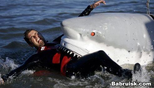 акула напала на человека