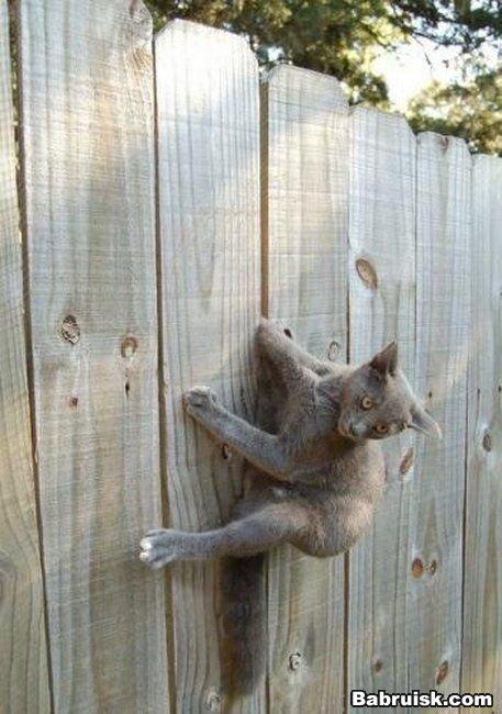 кот застрял в заборе