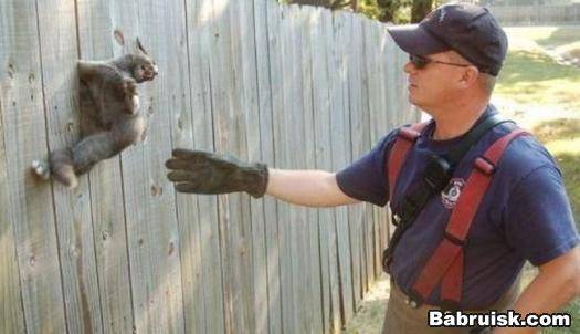 коту помогают выбраться, а он, сука, сопротивляется