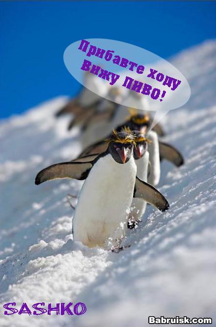 пингвины и пиво