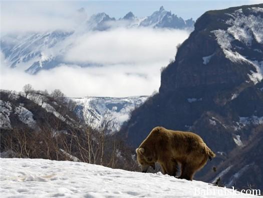 как срет медведь