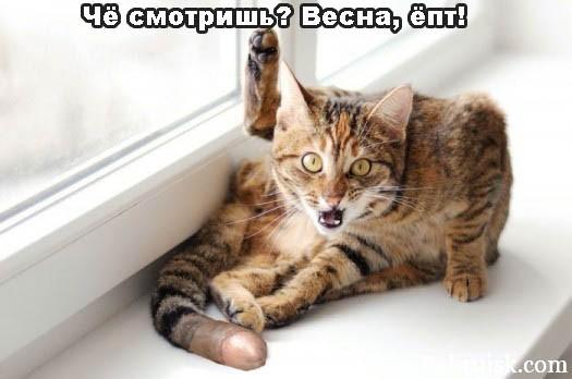 кот с длинным хуем о_О