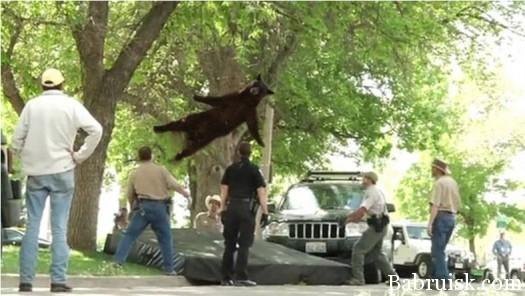 медведь наебнулся с дерева