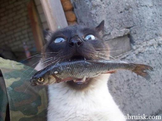 кот с рыбой в пасти