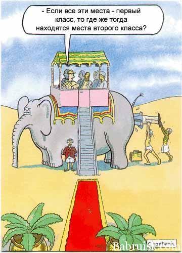 в жопе у слона