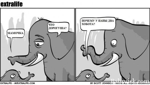 выебали слона в два ствола