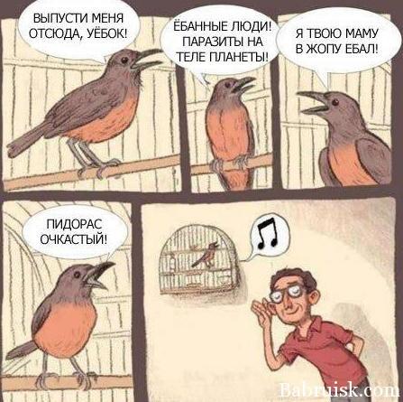 о чём пиздят птицы в клетках