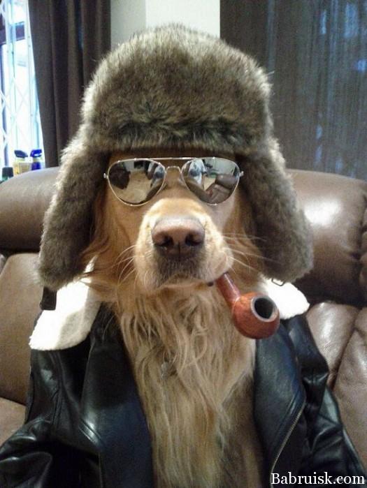 охуенный пёс!