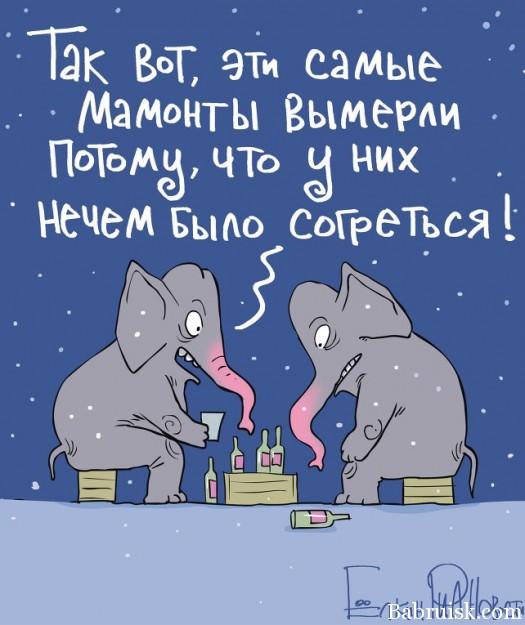 Слоны выпили два ящика водки
