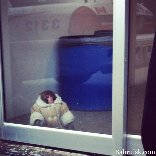 охуевшая обезьяна в тулупе