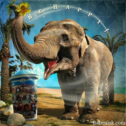 happy-elephant