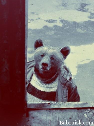 медведь пиздобол