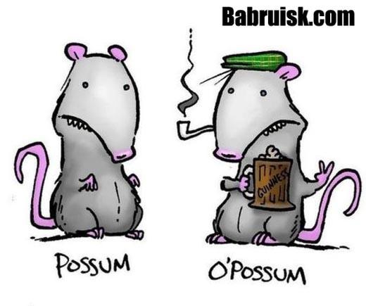 поссум о опоссум