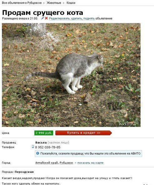 котик какает