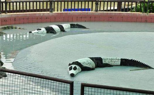 Тайские панды