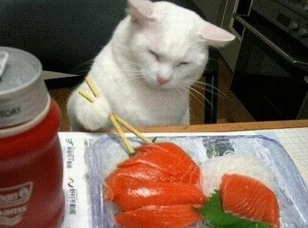 кот жрет красную рыбу