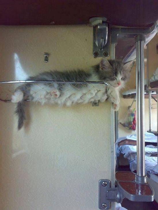 кот в плацкарте