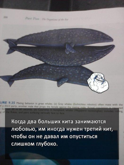 секс с китами