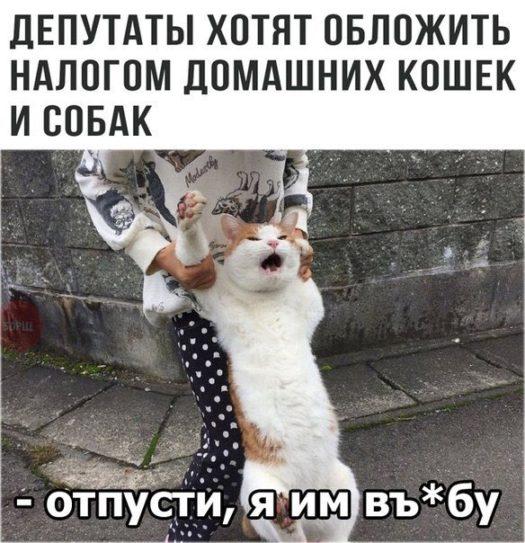 налог на домашнее животное