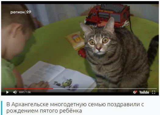 охуевший кот