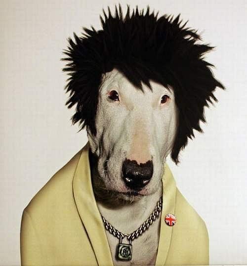 пёс в парике