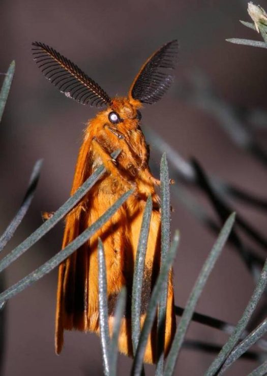 пёздный инсект!